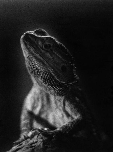 Winner Darkroom - 'Dragon' Maria Elizabeth Rotela Pereira – North East College Scotland
