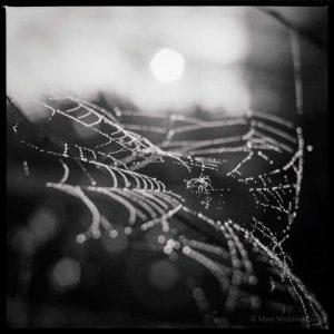 BAW image of a cobweb