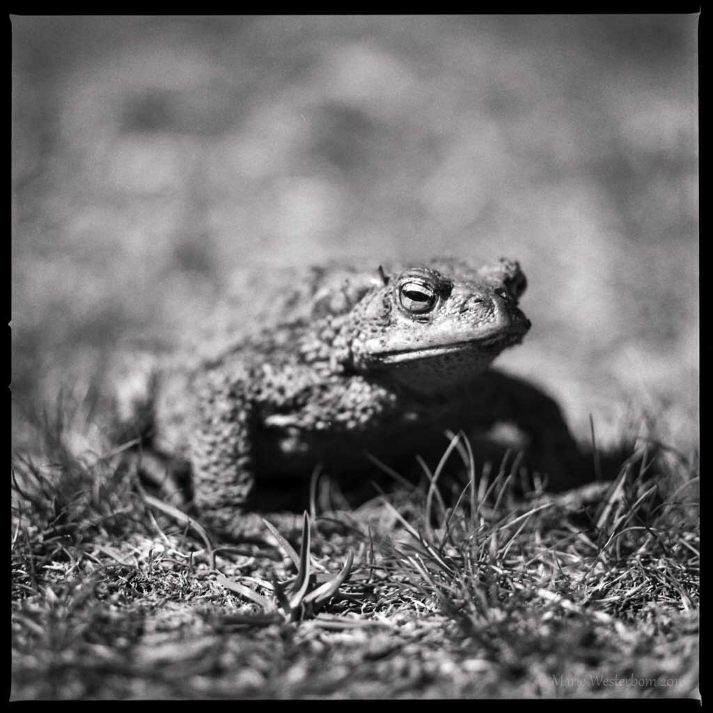 BWAW image of a frog