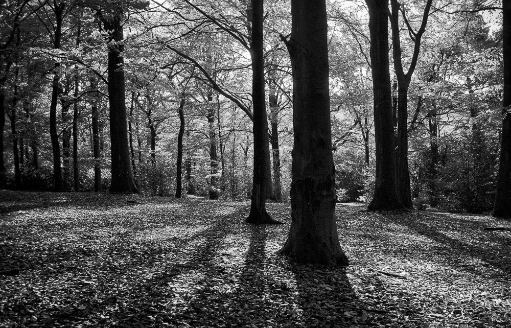 ‏@richard_pickup The Clearing @ILFORDPhoto Delta 100 in Ilfosol 3 developer