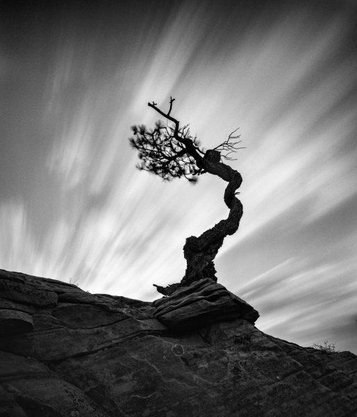 Tree #8 shot on ilford black and white film by Raynor Czerwinski: