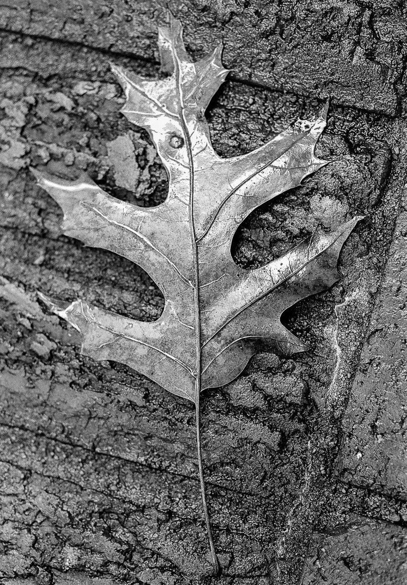 Black and white films image by @thisisjasonself for #ilfordphoto #fridayfavourites #autumn theme