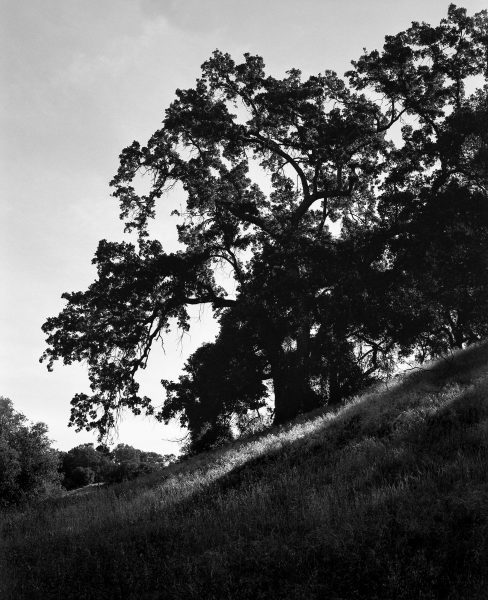 Image from Jack Whitefield shot on ILFORD black and white film