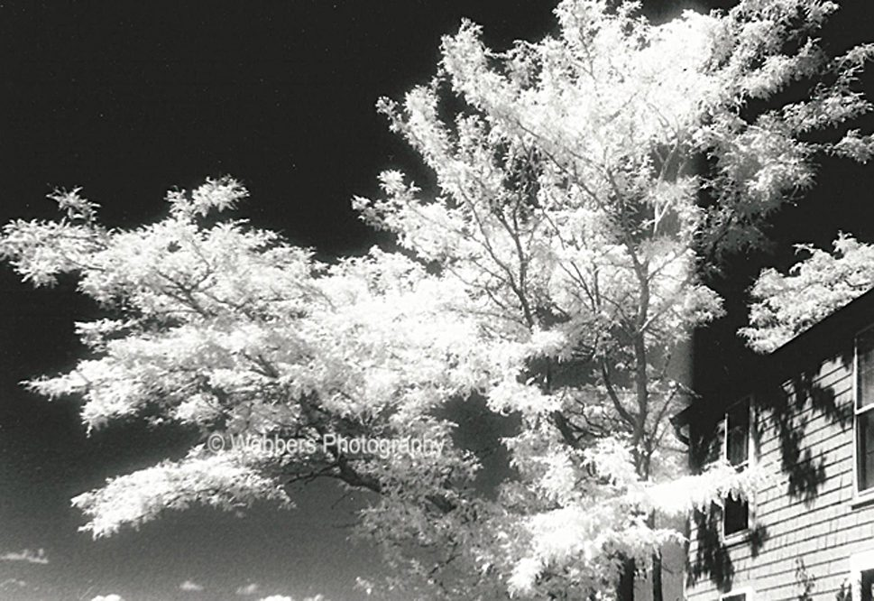 """""""Overhang"""" – infrared image of a tree growing close to a building in Rockport, Massachusetts"""