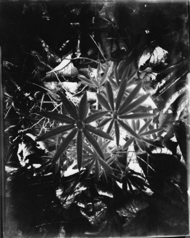 @danroyandersen 21h21 hours ago Hootlet More #ilfordphoto #fridayfavourites #wppd19 From Denmark. Homemade 8 x 10 pinhole camera. Paper negative/positive. Darkroom.