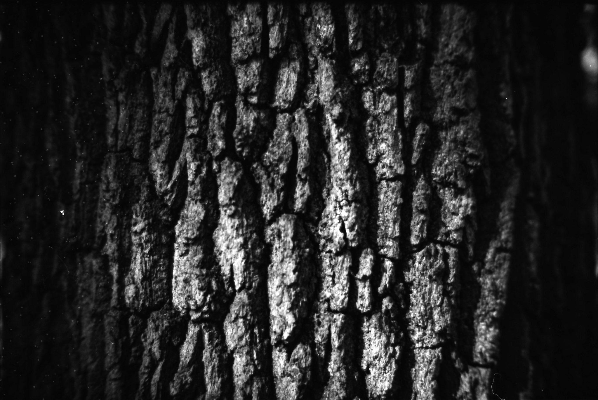 @AdibMufty · Oct 2 Nature's patterns 📷: Leica M6 🎞: Ilford PanF 50 ⚗️: CineStill DF96 #blackandwhitephotography #BelieveInFilm #filmphotography #ilfordphoto #fridayfavourites #patterns