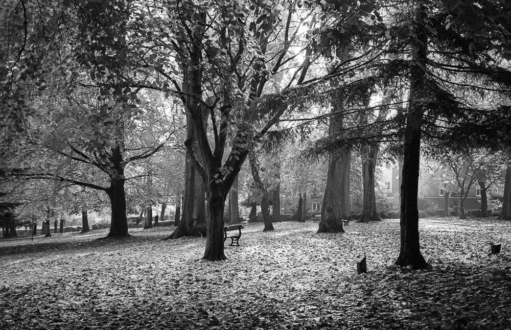 @richard_pickup · Nov 16 Autumn light in the park 35mm Ilford HP5+ film @ILFORDPhoto #fridayfavourites #beauty #ilfordphoto #hp5 #hp5plus #35mm #blackandwhite #blackandwhitephotography #fineart #landscapephotography #landscape #fineartphotography