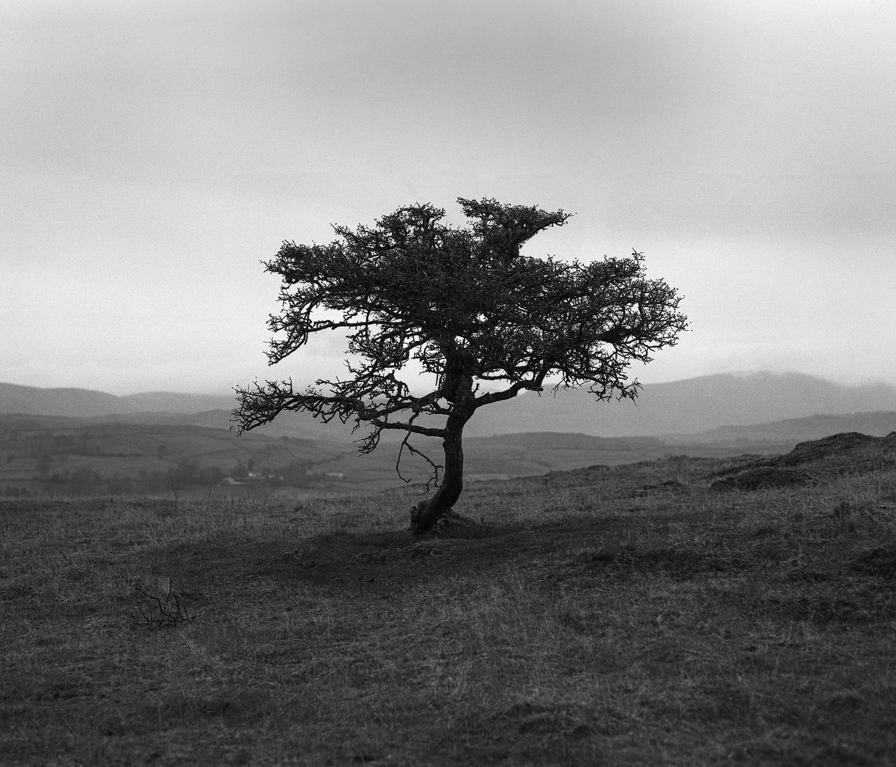 @JoeBrayford · 1h A lone tree on a rainy morning in The Lake District #IlfordPhoto #IlfordFP4 #FridayFavourites #6x7