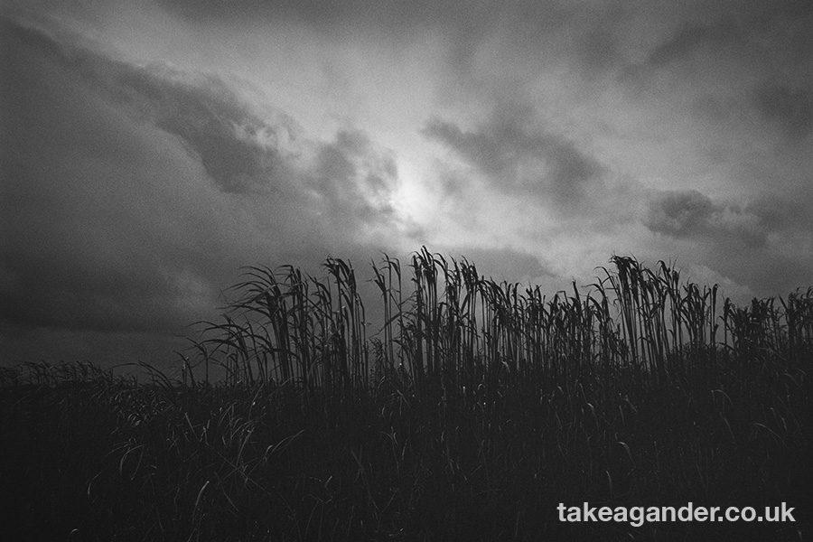 @TimGander · 50m Salisbury Plain - Jan 2020. @Ilford Delta 400, Ilfotec DD-X #ilfordphoto #fridayfavourites #shotin2020