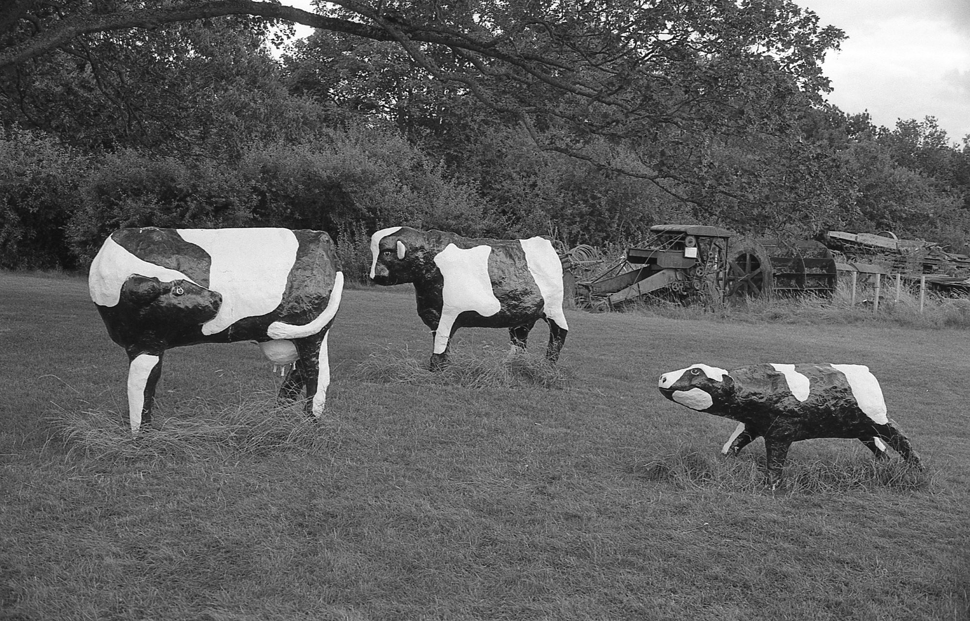 atlantean526 Replying to @ILFORDPhoto Concrete cows, Milton Keynes. Created by Canadian artist Liz Leyh in 1978, now safely grazing at Milton Keynes museum. #FP4plus film, developed in Perceptol 1:1/ 15mins/ 68°F. Minolta 600si classic/ 35-70mm f4 zoom August 2019 #ilfordphoto #fridayfavourites