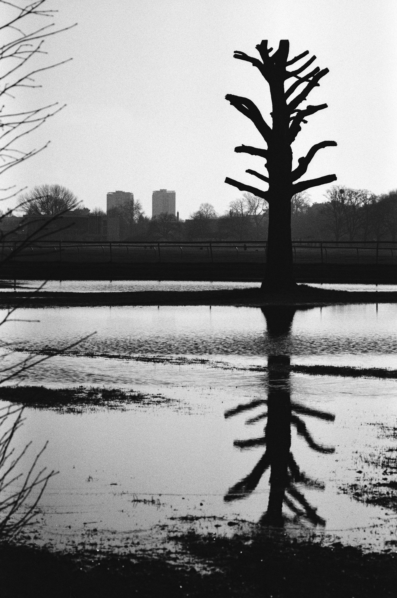 Black and white photo of tree by Hamish Gill