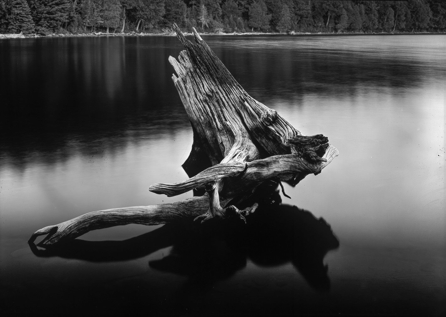 Weathering the Shallows - A 5x7 paper negative shot by Don Kittle on ILFORD Mutigrade paper