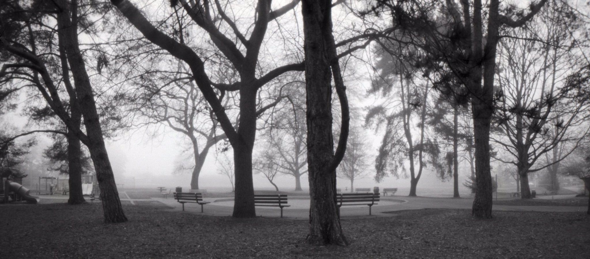 @DrMarsRover From the time before many of our parks closed. Fog in the park. @ILFORDPhoto Delta 100 RSS 6x12 pinhole #bestshotsofar #ilfordphoto #fridayfavourites