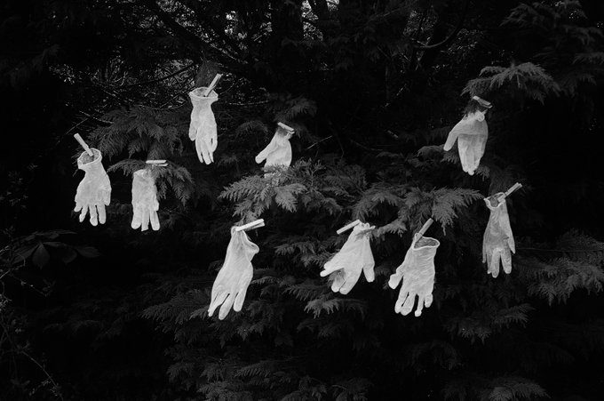 @WellerMonica 'You Need Hands' by Max Bygraves. I took this in our garden in our 10 week c/v http://lockdown.No walks, nothing. I tried to sum up covid19's effect on us. These protective gloves did it. IlfordXP2 Olympus Trip #ilfordphoto #fridayfavourites #lyricsandfilm @AgPhotographic