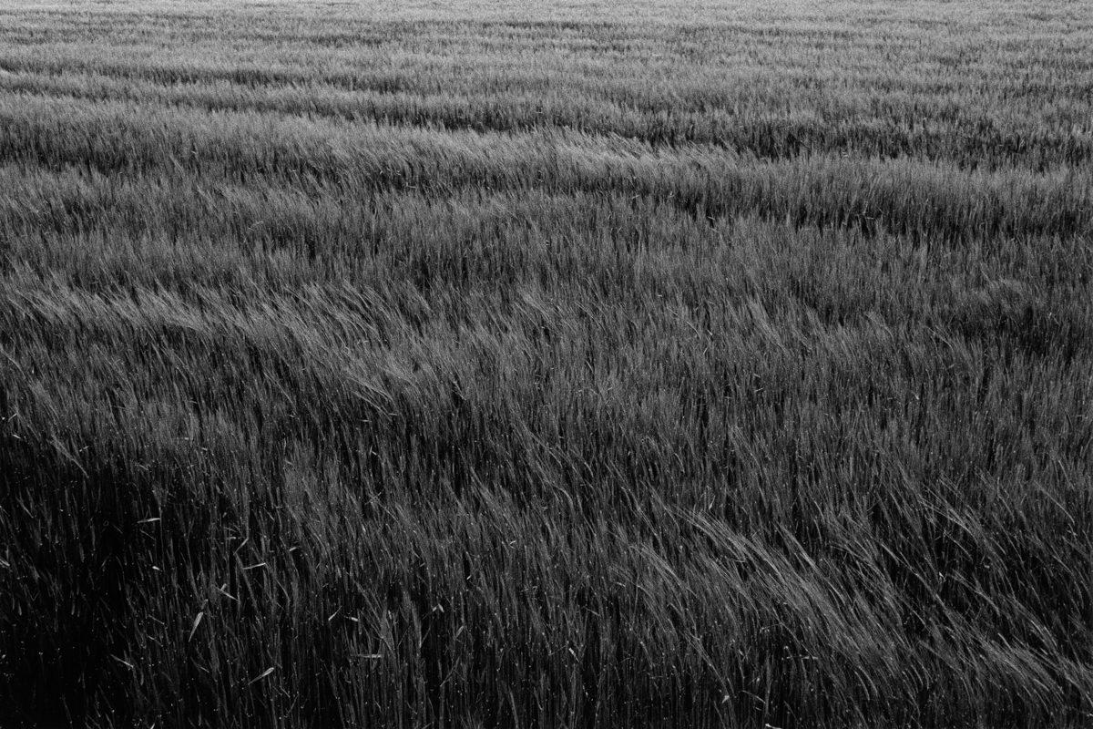 Fields in Vienna shot on HP5 ©Jahan Saber