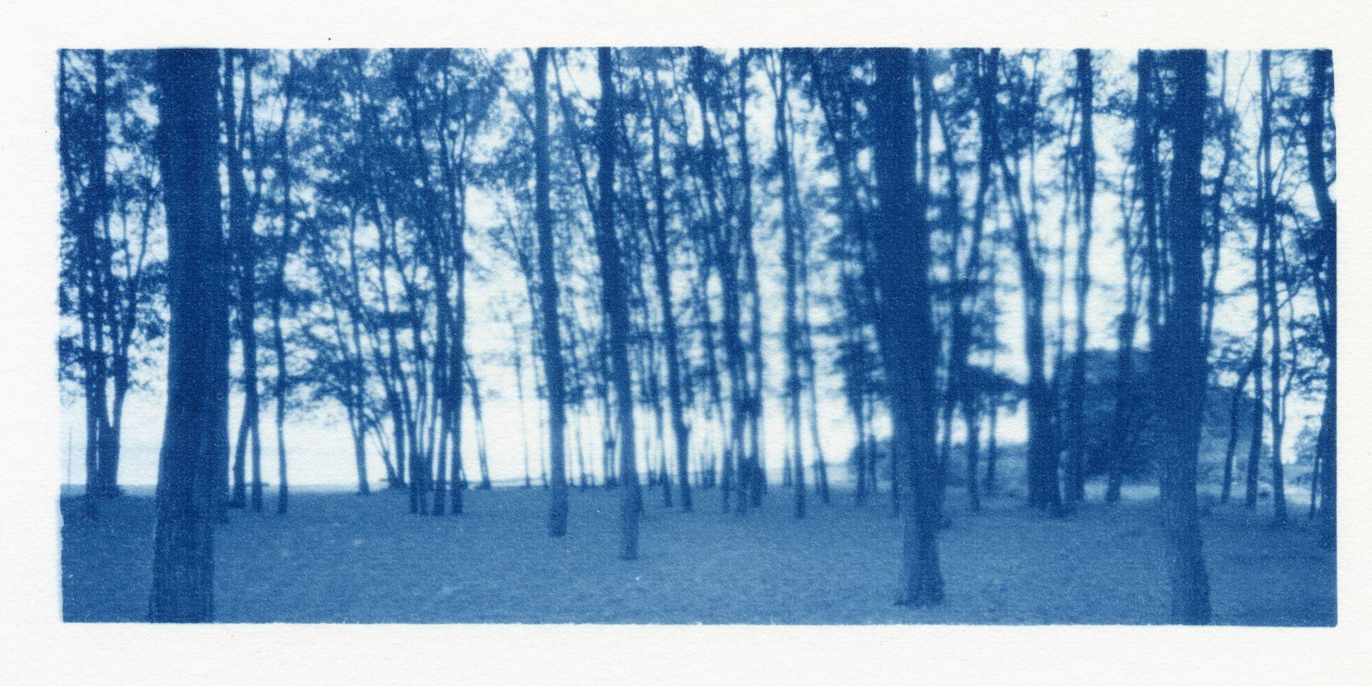 cyanotype from orthos plus negative