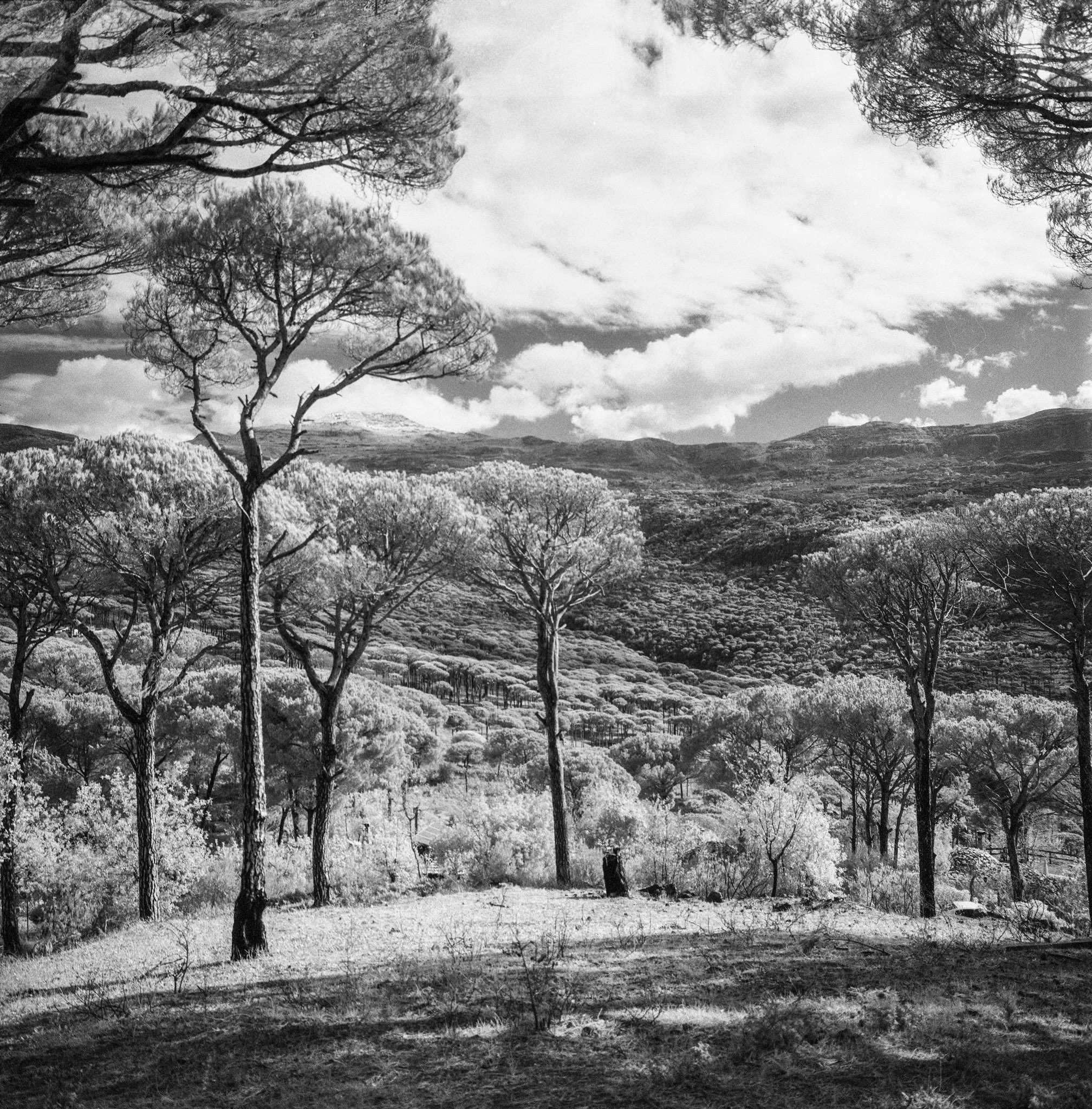 @AdibMufty Nature in a dreamy world! Camera: Hasselblad 500cm ?: Ilford SFX200 #filmphotography #believeinfilm #ilfordphoto #fridayfavourites #shotonsfx