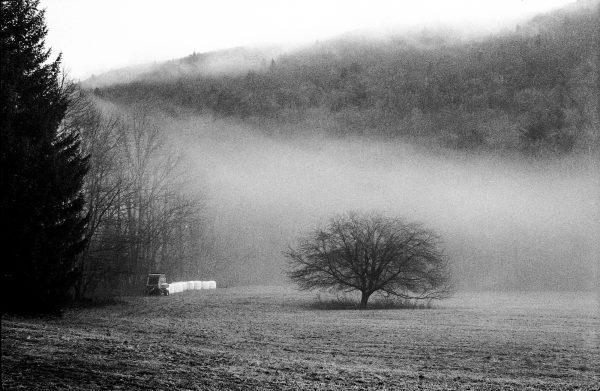 MorningFogontheFarm_NewYork_IlfordHP5_LeicaM6