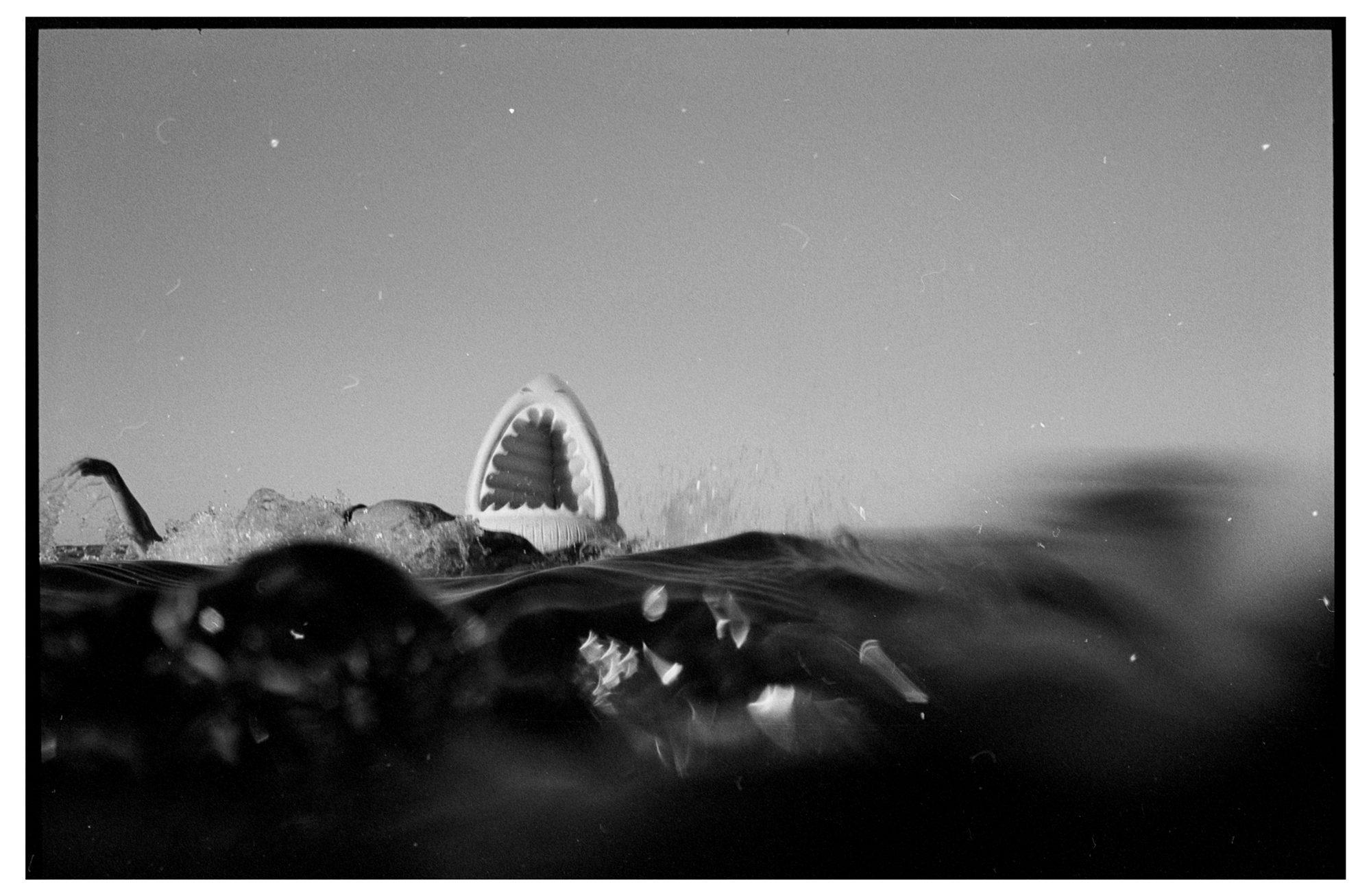 Shark by Brett Hillyard on ILFORD black and white HP5+ Film