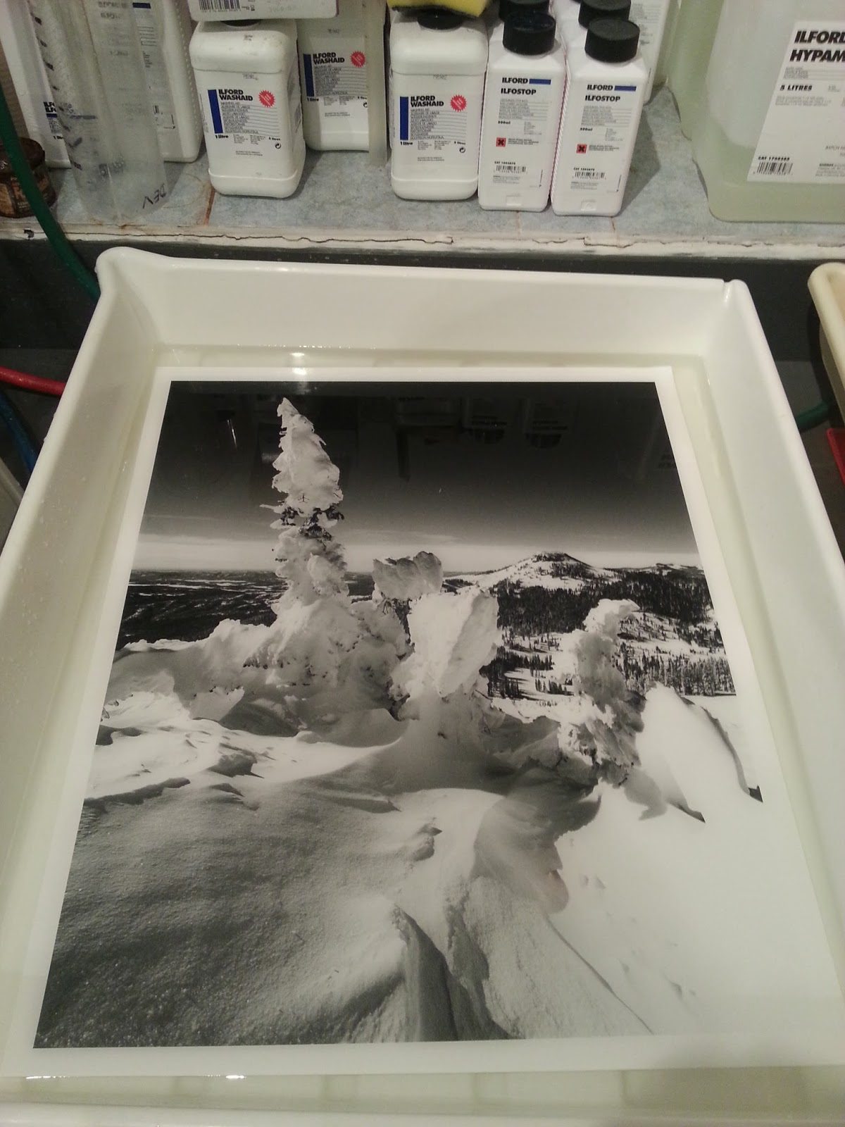 @monodave · 22h @ILFORDPhoto #ilfordphoto #fridayfavourites Here's a 24x20 inch #fbprint in the fixer dish in my darkroom. The print was used on the Ilford stand at Photokina 2014 in Cologne and was printed on the new Ilford Multigrade Cooltone FB glossy paper. Wolf Creek Colorado