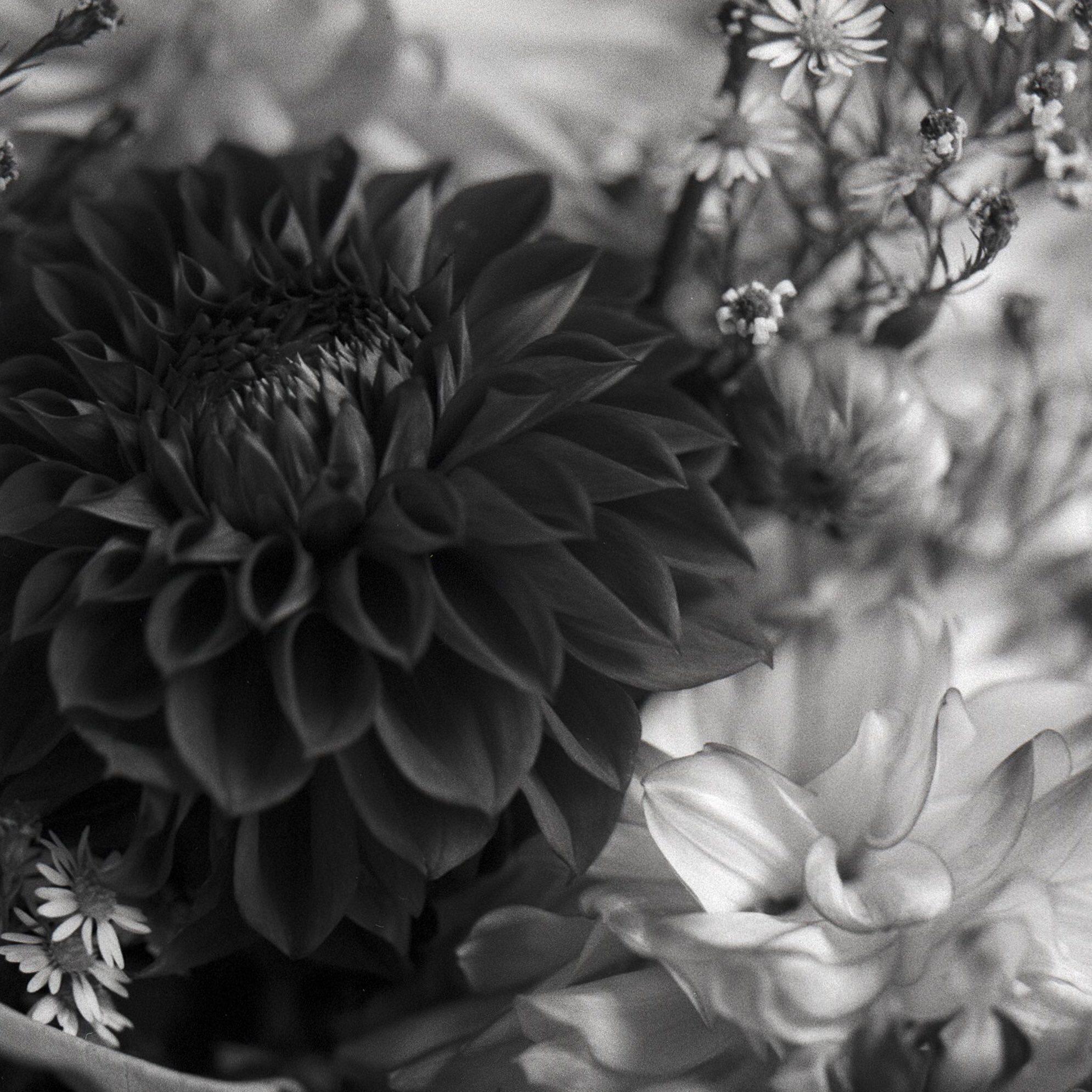 @DrMarsRover Autumn bouquet @ILFORDPhoto Delta 3200 #ilfordphoto #fridayfavourites #shallowdof