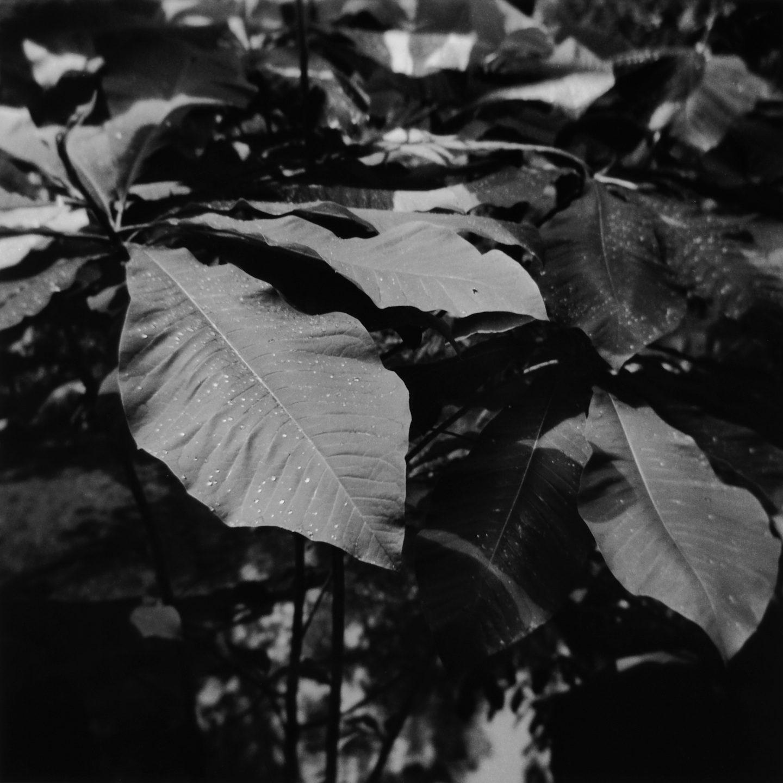 @almroa · 16h Taken on a soggy summer morning. Not bad for a plastic camera. Camera Holga 120N 🎞 Ilford HP5+ ⚗ Ilford DD-X Scroll Ilford MGIV RC (Glossy, 8x10) #ilfordphoto #fridayfavourites #botanicals #holga #mediumformat #hp5 #film #filmphotography #blackandwhitephotography #swva