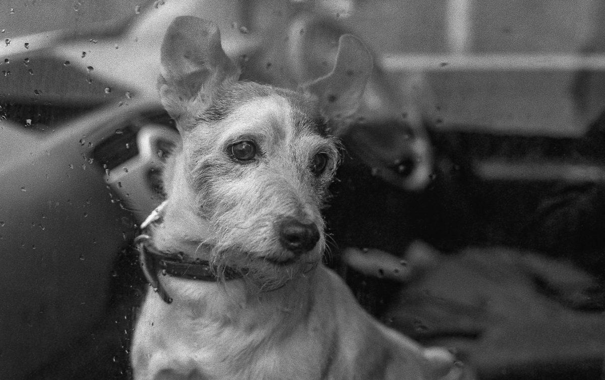 "@timdobbsphoto · 19h ""Trev"" .. Pentax Super A, 50mm f1.7 on ilford FP4 @ 200 @ILFORDPhoto #ilfordphoto #fridayfavourites #bestof2020"