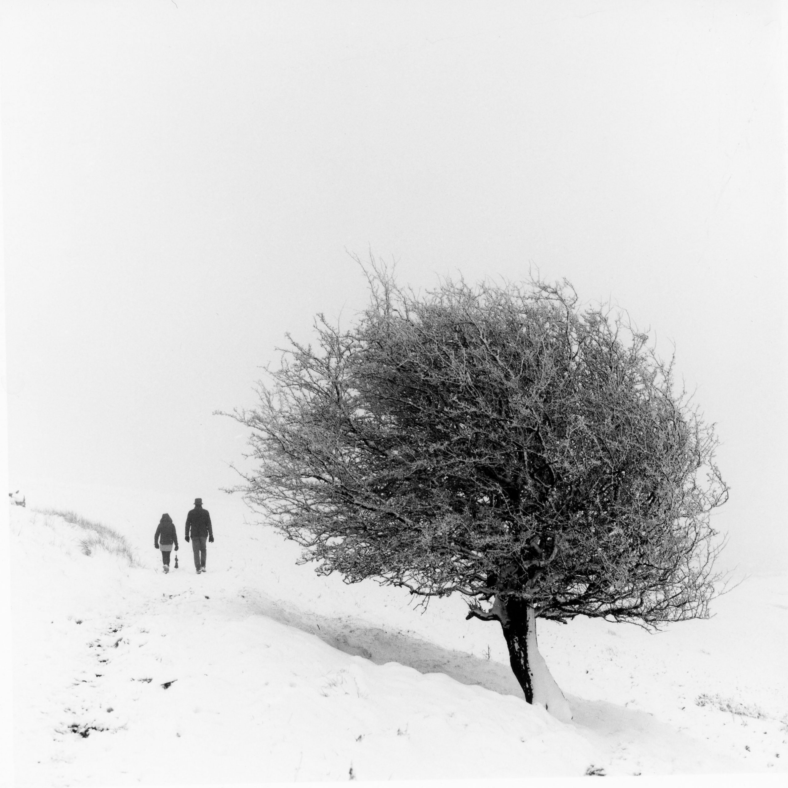 @debrawilsonsays · 2h Things that make me smile- snow on hawthorn trees. First darkroom print. Shot for @ILFORDPhoto #ilfordphoto #fridayfavourites #positivenegative Now it's back into the darkroom for another go!