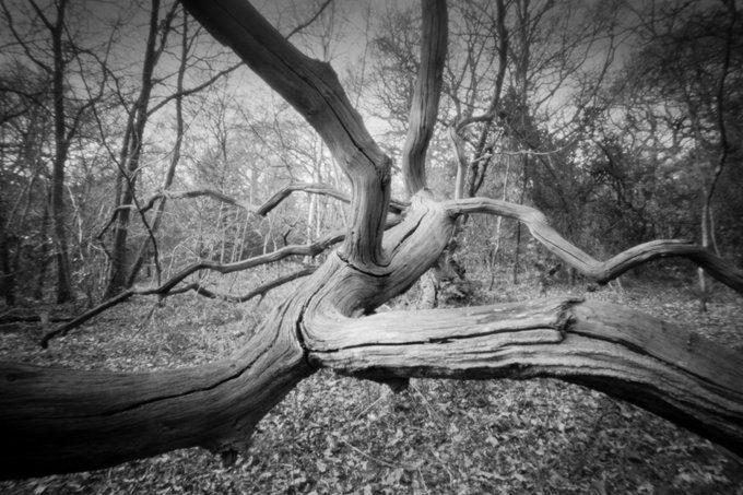 @paulasmithphoto · Apr 28 My favourite pinhole shot for #ilfordphoto #fridayfavourites #ffpinhole. Taken with the #Ondupinhole MF 6x9, on @ilfordphoto FP4+ EI 125 developed Ilfotec HC 1+31.