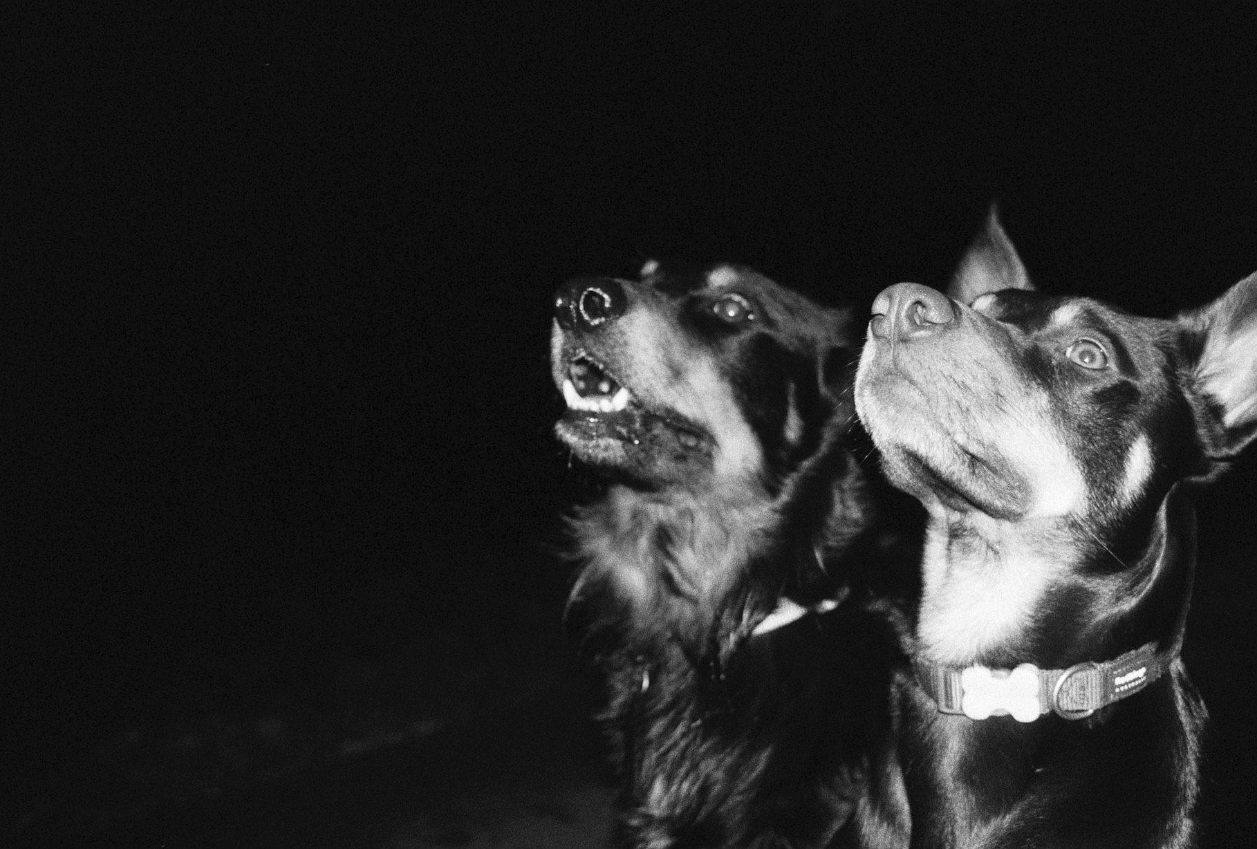 A pair of monsters lurking in the dark - Taken in Bangor, Wales on Kentmere 400