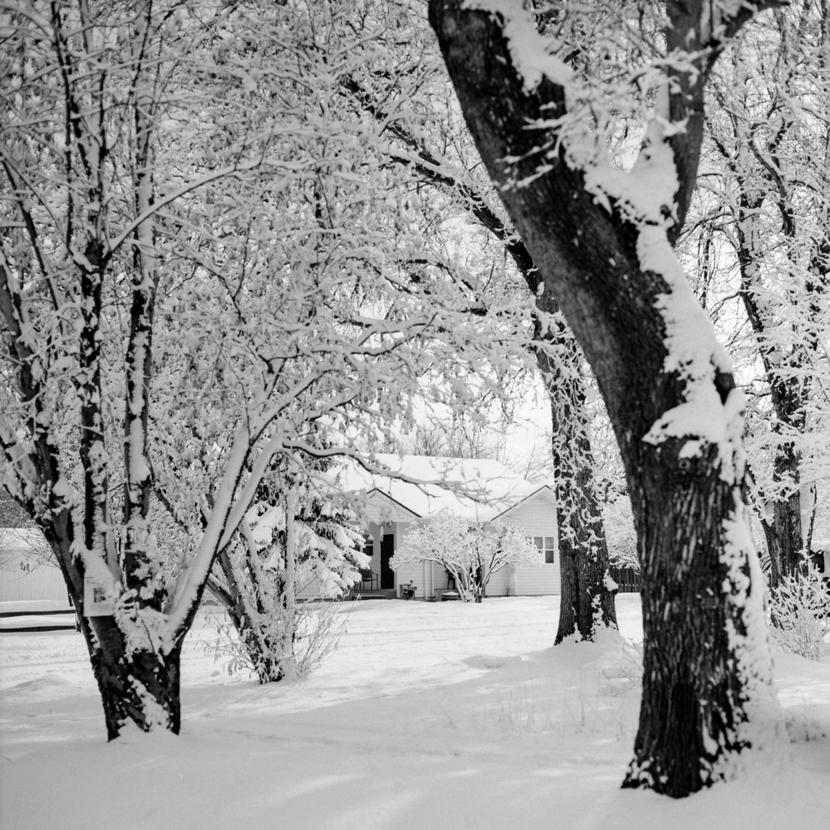 ILFORD PANF Plus film in Montanta Snow by Scott Young