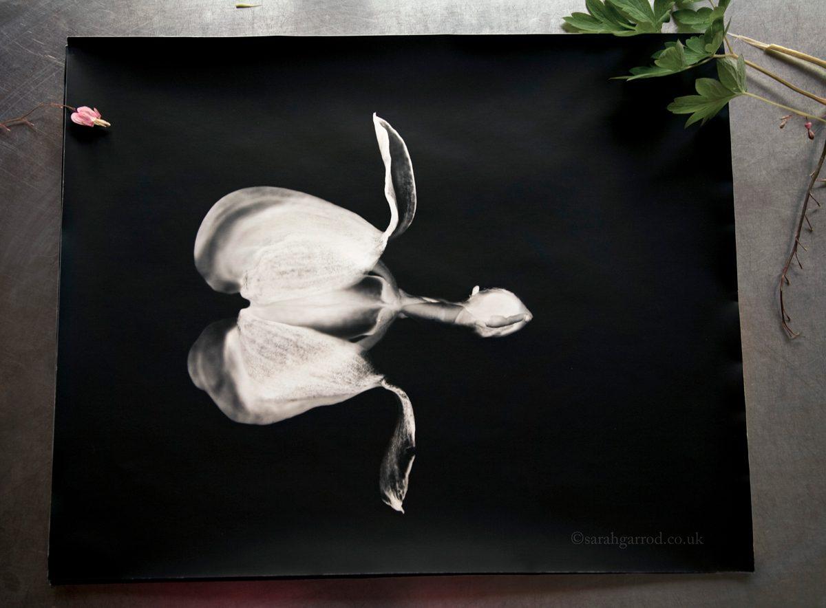 "Chelodina Rugosa . Printed on Ilford Fibre Matt 16x24"""
