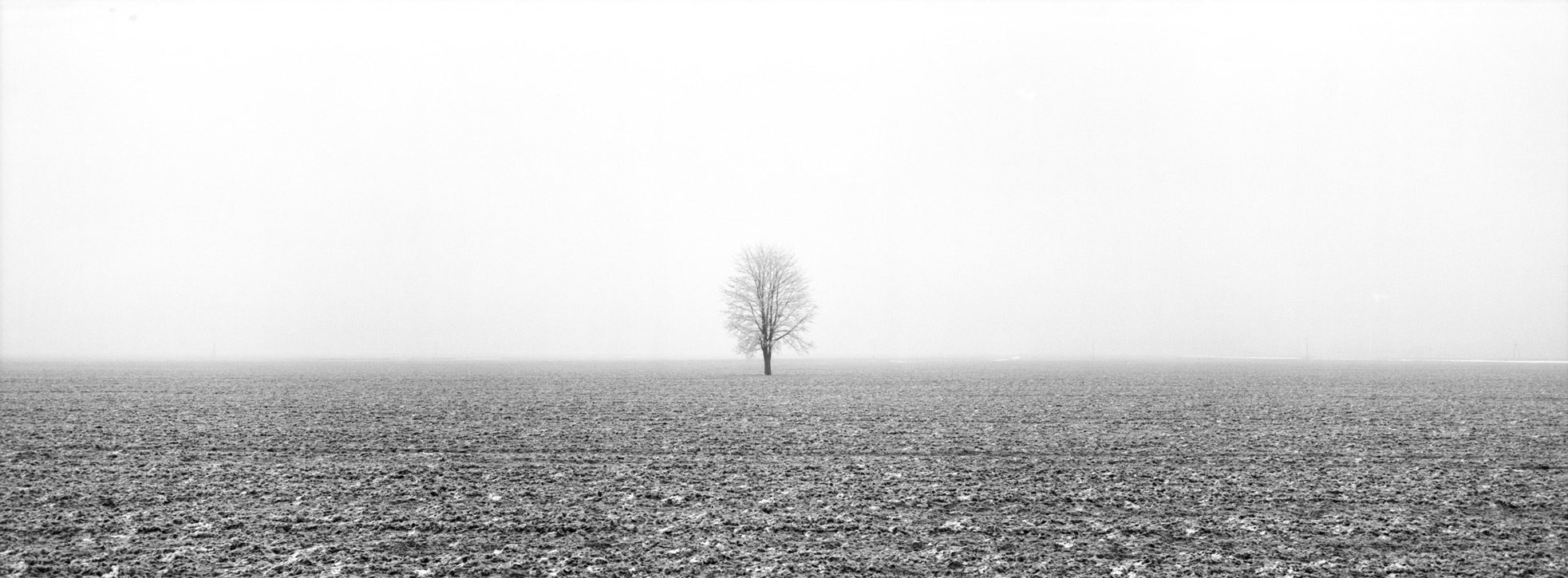 Lonely Tree near Lisewo f = 8, exp = 1 / 90s