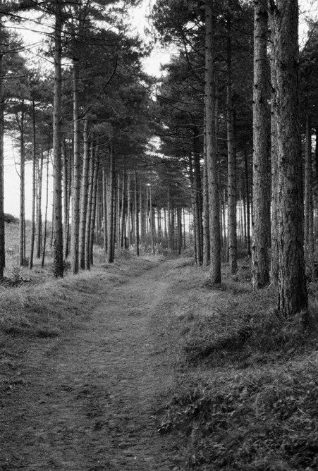 Newbrough forest on Anglesey, one of the trails that leads to the beach. Shot on Kentmere 400.