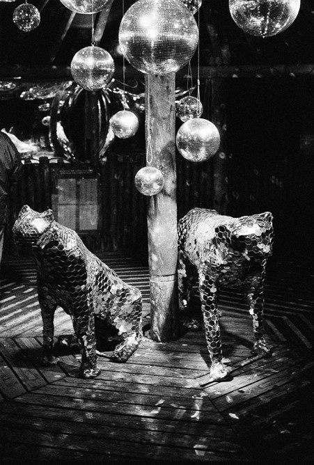 Reflective jaguars at the lanterns exhibit in Chester Zoo. Shot on Delta 3200.