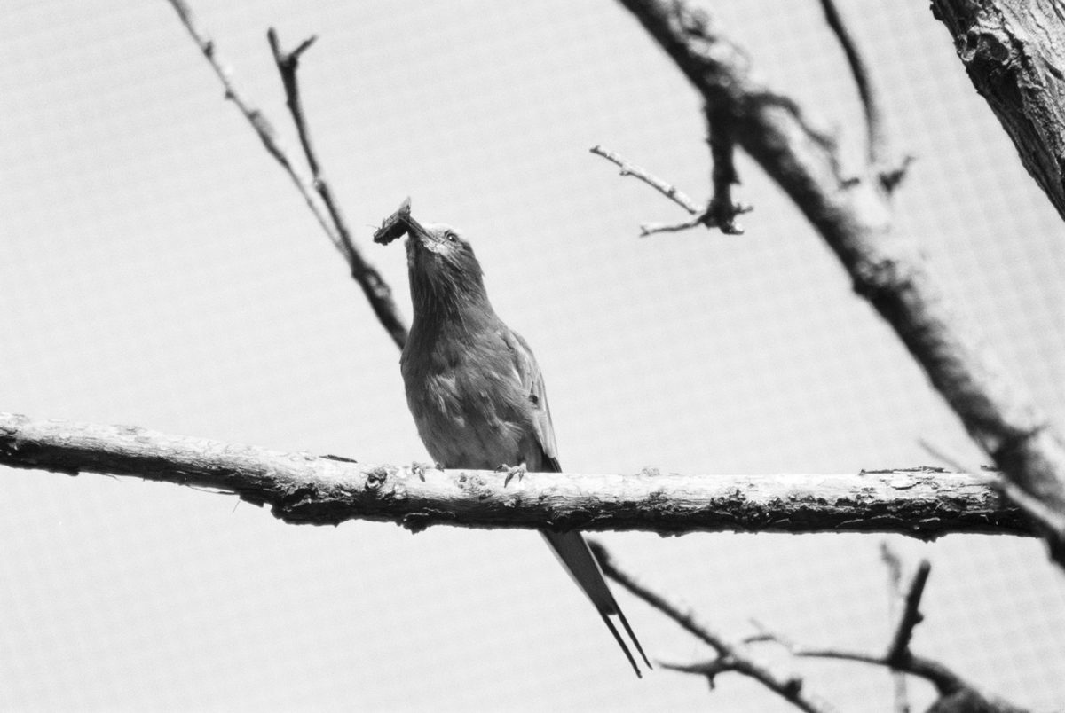 Bird-and-Bug---FP4-Nikon-F601 Behind the Film Michelle Parr